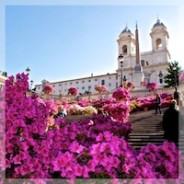 Milliers d'azalées en fleurs place d'Espagne